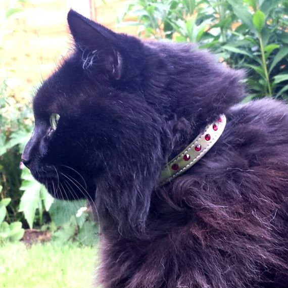 Cat in gold and red collar